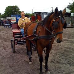 Horse Ride II