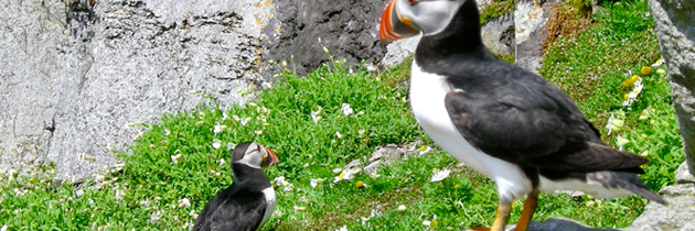#108 Skellig Michael During Puffin Season: Video