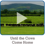 #110 Until the Cows Come Home in Templederry, County Tipperary