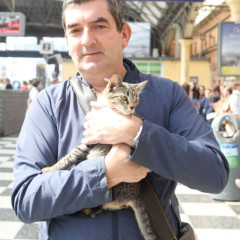 Irish Rail Reunites Lost Cat with Owner Using Social Media