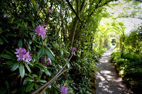 Rose Walk at Altamont Gardens, County Carlow, Ireland