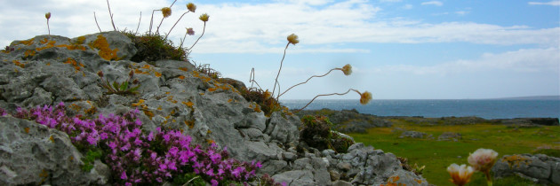 Will Your Visit Damage the Burren?