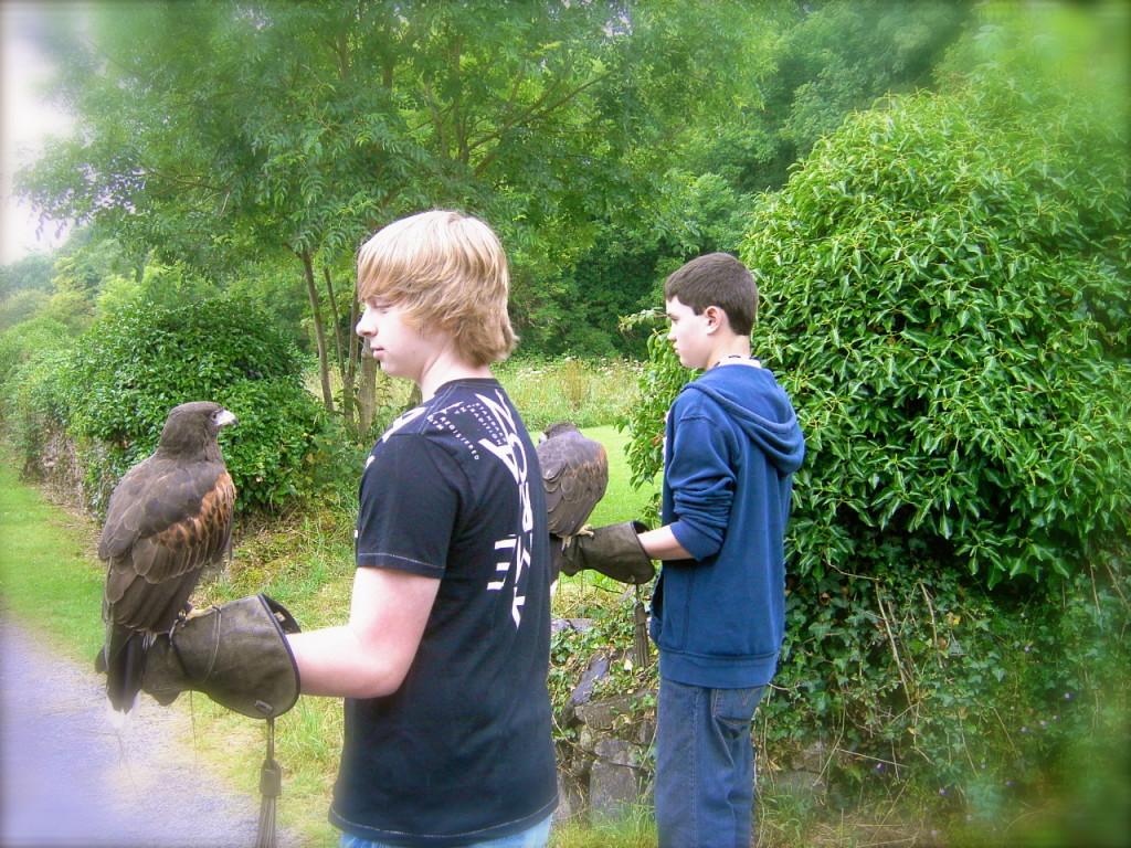 falconry cong