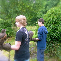 Falconry School in Cong, County Mayo