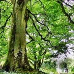 Magical Irish Roads: Bunny Lane
