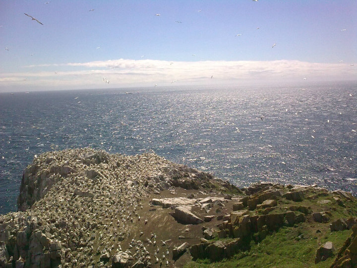 View from Great Saltee