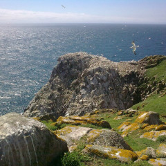 Worth Their Salt:  Ireland's Saltee Islands