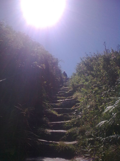 Steps on Great Saltee