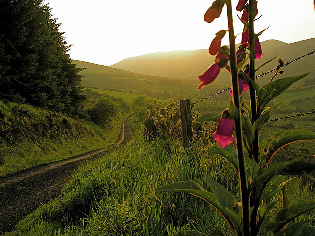 10 Reasons to Ditch the Tour Bus and Self-Drive in Ireland
