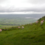 sheepknocknarea2