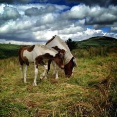 All the Things Irish Firesiders Loved in 2013 – A Joyful Recap