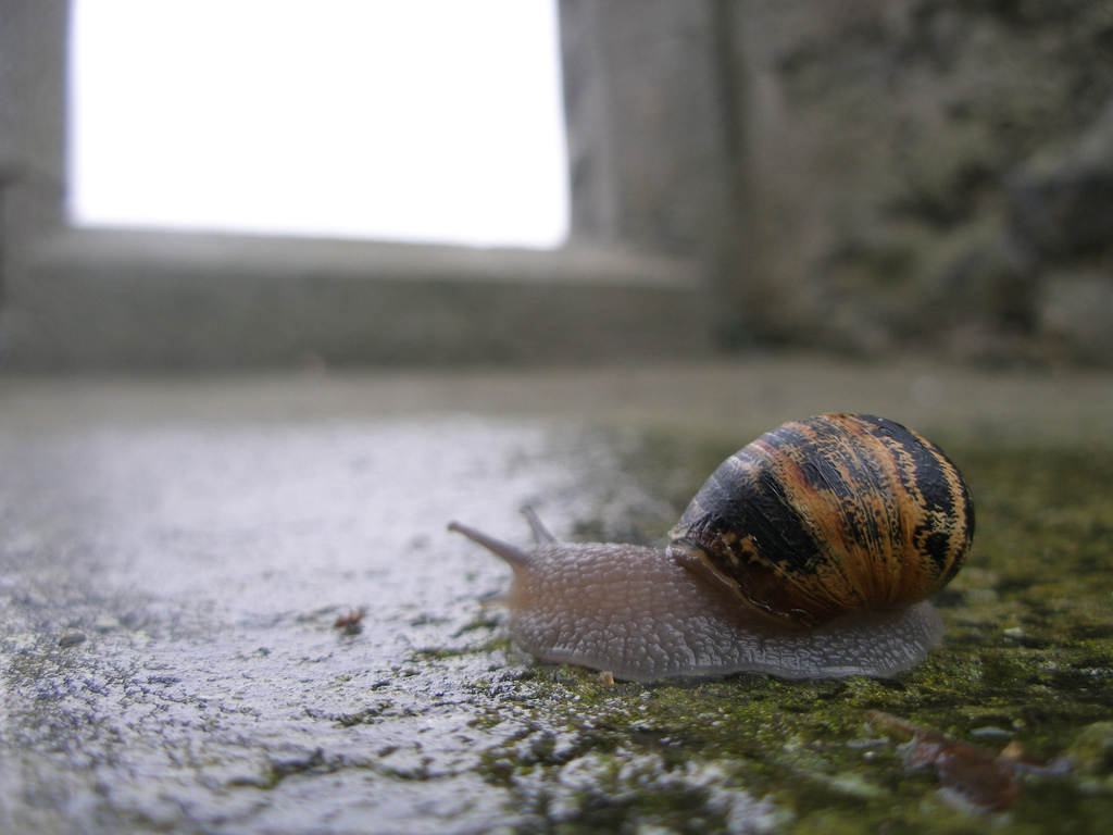 Snail at Kilmacduagh, Co Clare