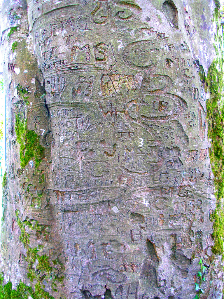 A close up of some of the signatures of famous Irish authors carved into the trunk of the Autograph Tree at Coole Park in Gort, County Galway, Ireland.