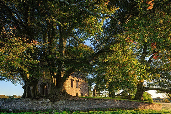 The Beeches at Monaincha Abbey, Co Tipperary by Carsten Krieger.