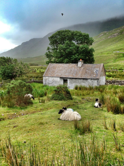 Connemara Cottage with Sheep