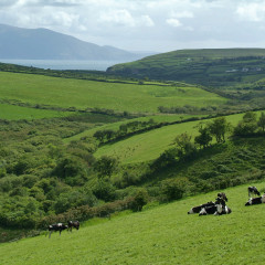 Postcard from Ireland: Dingle, Co Kerry
