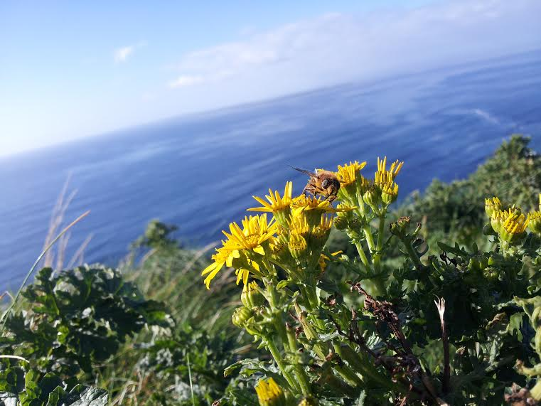 A bee photobombing Erin's photo of the Aran Islands