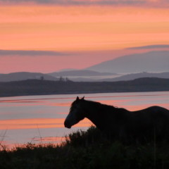 Postcard from Ireland: Horse on Inish Née, County Galway