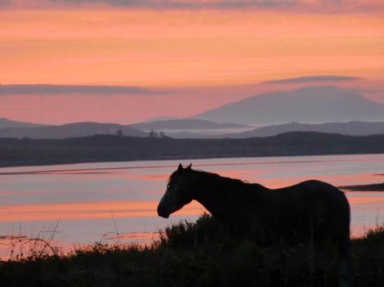 horse on inish nee