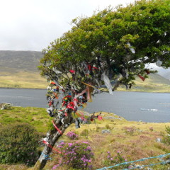 Postcard from Ireland: The Wishing Tree – Killary Harbour, County Galway