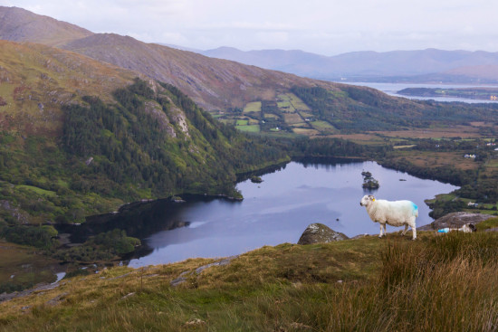 Healy Pass, Beara Peninsula, Ireland - photo courtesy of Ed Turner - all rights reserved