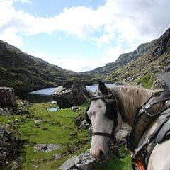 Pony Cart Ride Through the Gap of Dunloe